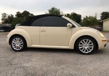 beetle_2.jpg